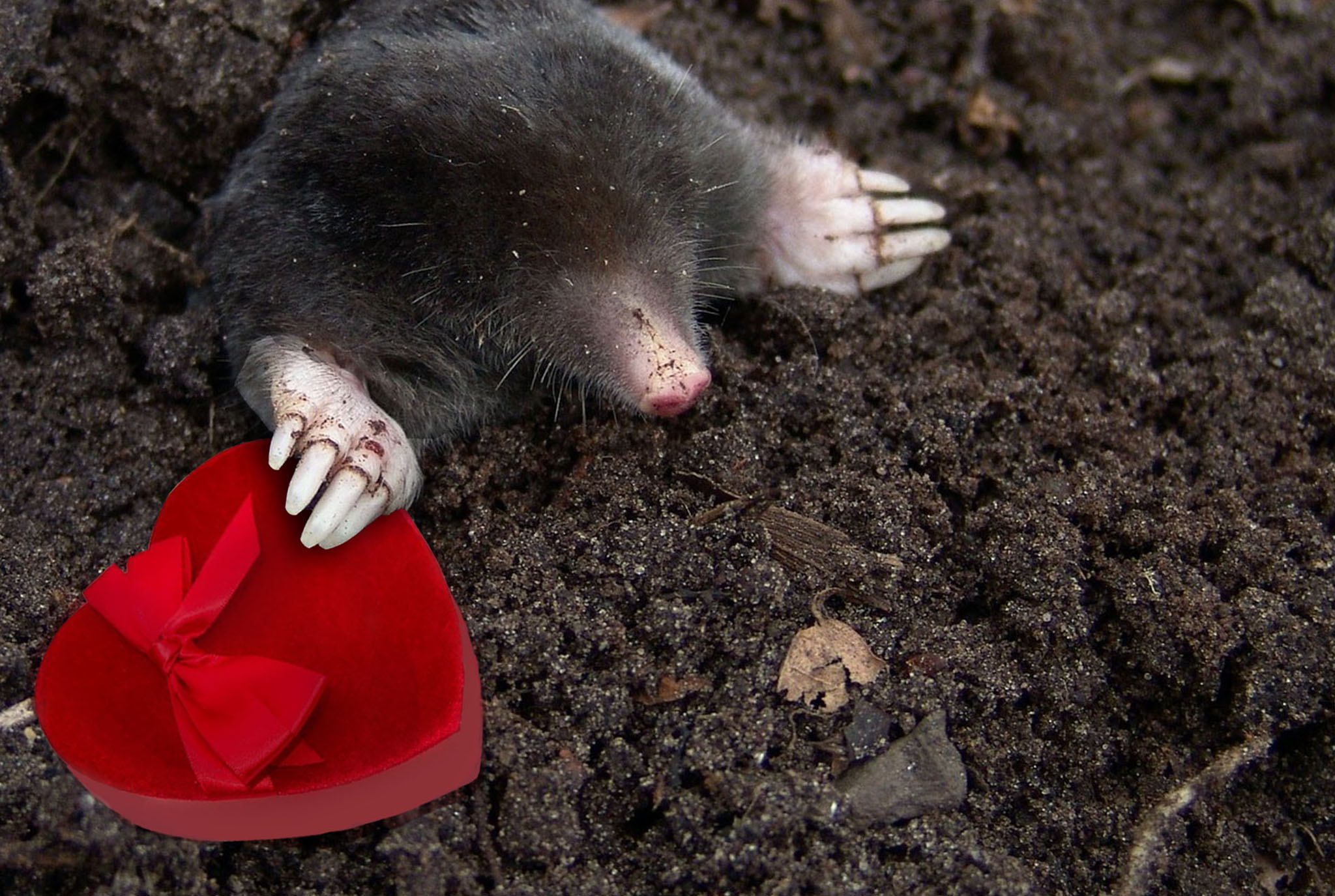 Mole Valentines Blog Post