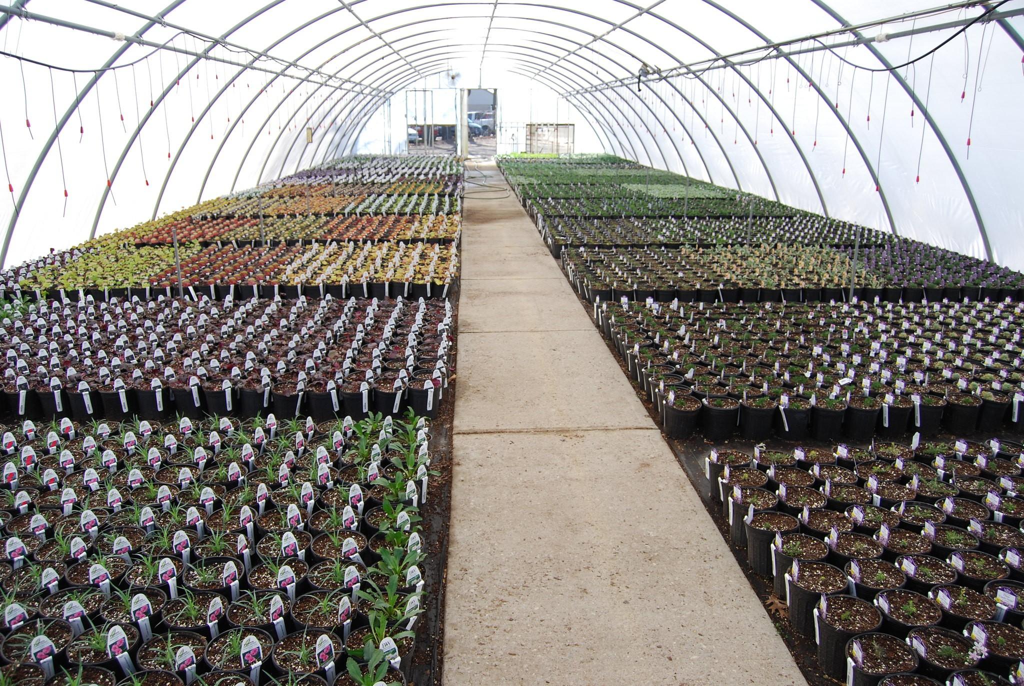Delaware Greenhouse