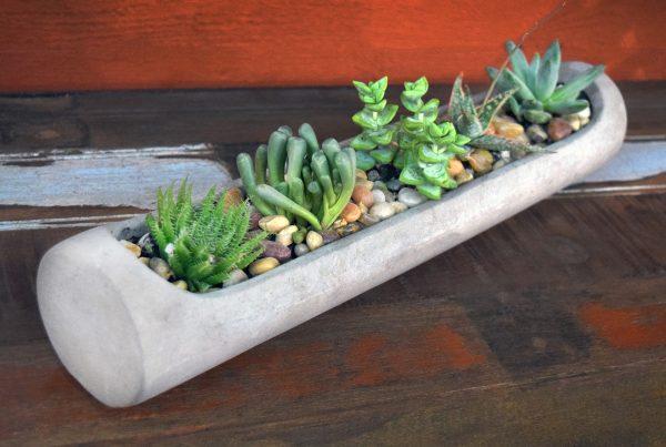 Succulent Cement Planter Workshop