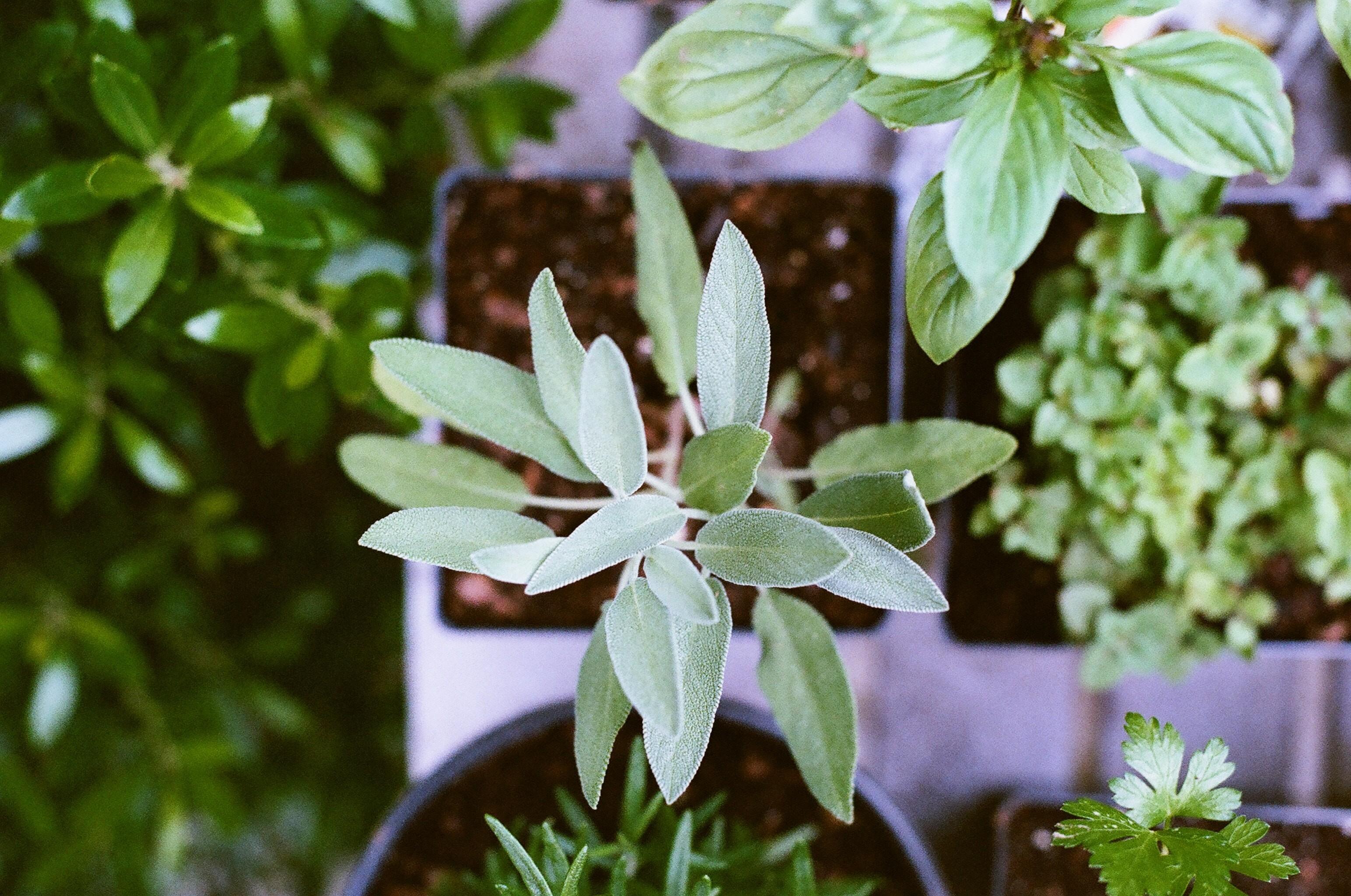 Herbs Detail