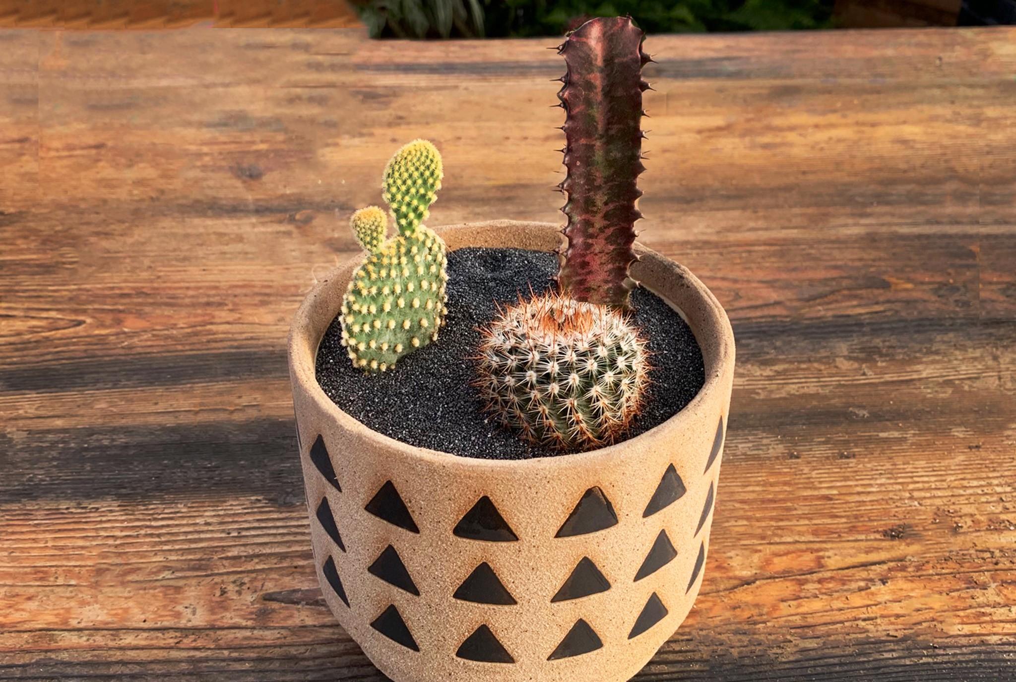 Cactus Love Workshop