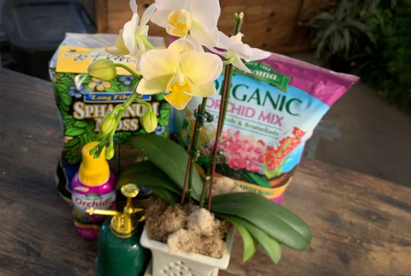 Orchid Love Workshop