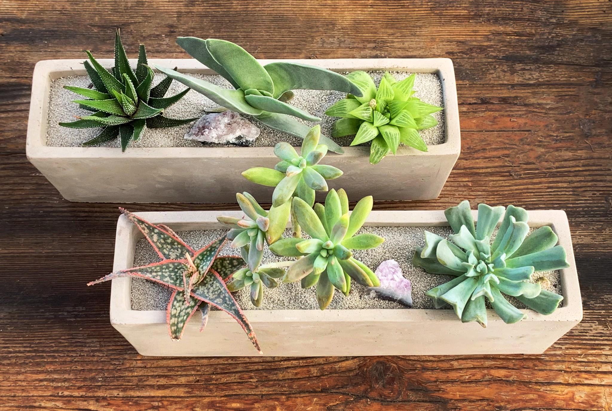 Succulent Love Workshop