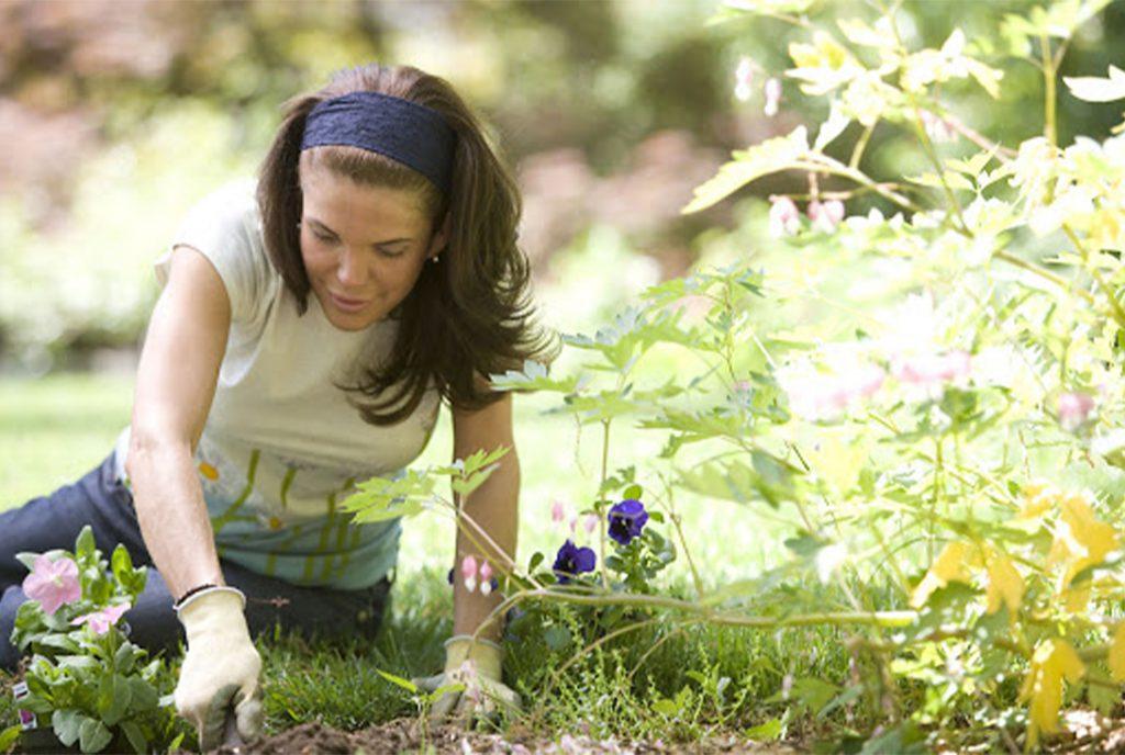 Things to Do Garden_WEB_APR2020