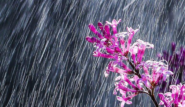 Let-it-Rain_WEB_July2020