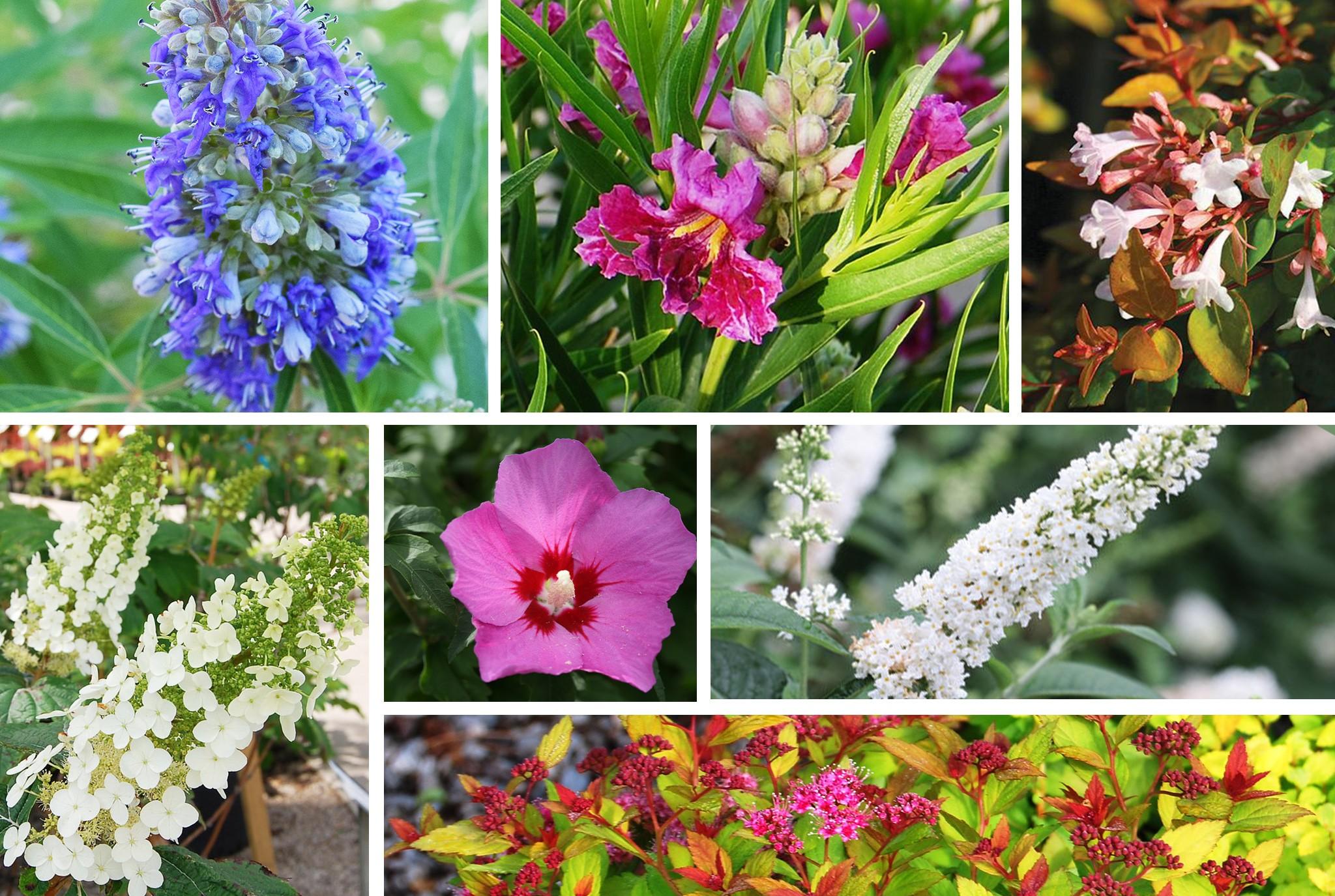 Spring Blooming Shrubs_WEB_JULY2020