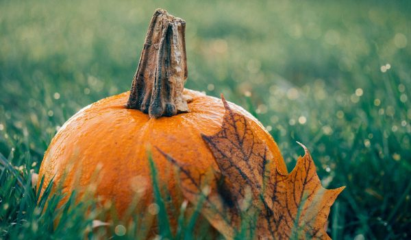 Fall-is-for-Planting_WEB_SEPT2020