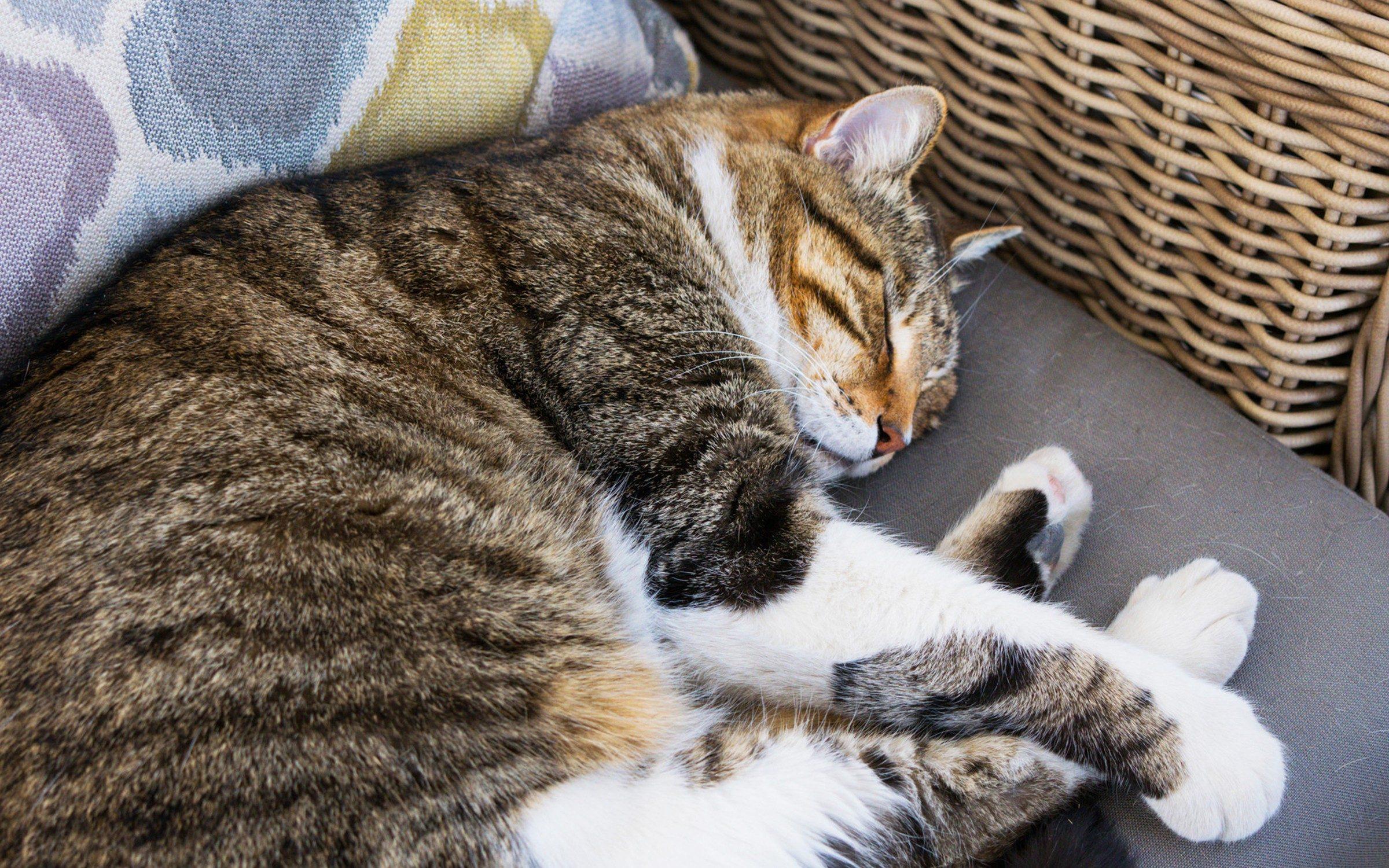 Ozzie Asleep on Patio Furniture