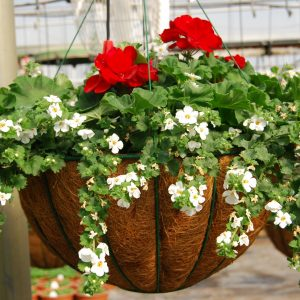 Hanging Baskets For Sun