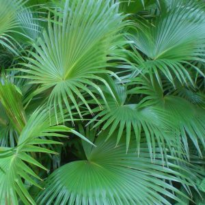 Tropical Plants